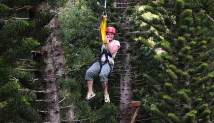 treetop zipline