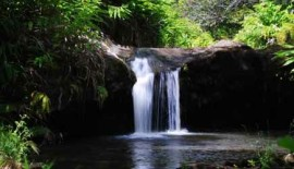 kohala-waterfall-tour-3
