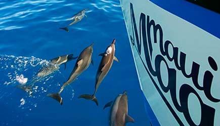 dolphins at molokini