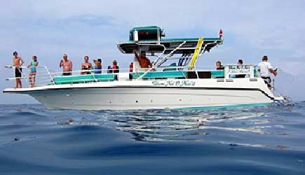 dolphin snorkel swim