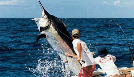 Oahu fishing charters for Shore fishing oahu