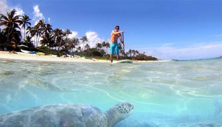 stand up paddle with sea turtles