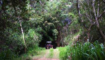 ATV in Tropical Forest
